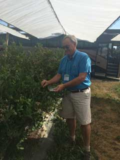 Rep. Rick Hansen (DFL-Minn.) picking blueberries during the NCSL Agriculture Task Force tour held prior to the 2015 Legislative Summit in Washington