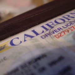 How are Driver's Licenses/Voter Registration Laws Doing?