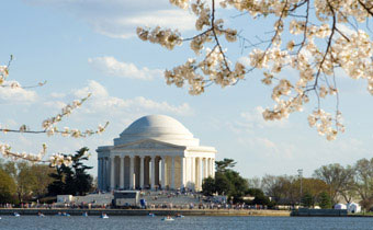 Picture of cherry blossums in Washington, D.C.