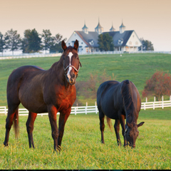 Horses in Lexington, Ky.