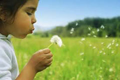 Little girl blowing on a dandelion head